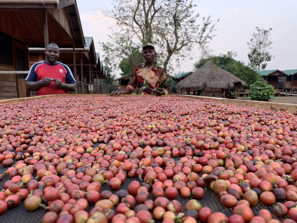 Coffee project in south sudan
